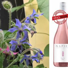 DO ZÍTŘEJŠÍ PŮLNOCI JEŠTĚ PLATÍ EXKLUZIVNÍ 15% SLEVA NA NAŠE EXKLUZIVNÍ VÍNA!  Ochutnejte osvěžující letní drinky z našich exkluzivních růžových vín. Zkuste třeba jihoafrické Napier - Classic - Rosé - Petite Marie, 2019 nebo jihoamerické Ventisquero - Clásico - Cabernet Sauvignon Rosé, 2019.  Nalijte do sklenky 2 díly rosé (případně pár kapek okurkového sirupu), vložte pár (nebo víc než pár) kostek ledu, zastříkněte 1 dílem sodovky a přidejte okurku nebo ještě lépe po okurkách vonící mladé lístky a krásné modré a růžové, trochu sci-fi, květy brutnáku lékařského (právě vrcholí jeho sezóna).