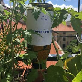 Teploty dnes budou sahat ke 30 stupňům. Nejen rostliny budou potřebovat osvěžení. Zalijte (se) s Víno-klubem;) Třeba šťavnatou, polosuchou Pálavou z nano-vinařství Švásta &Kadlec. A lahvi pak můžete dát druhý život v truhlících!
